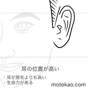 耳の位置が高い